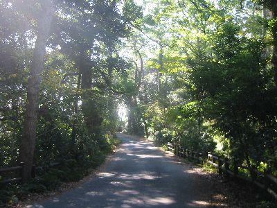 真鶴岬の道 県営みさき駐車場のT字路へ戻り、一方通行の道を先へ。やはりずっと森の中... 真鶴半